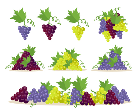 winy: Collection of different grapes sorts. Fruit for preparation check elite vintage strong wine. Bunch or cluster of grapes. Grapery racemation. Part of series of viniculture production items. Vector