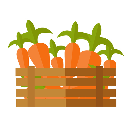 assortment: Fresh carrot at the market vector. Flat design. Delivery farm products, grocery store assortment, foods for diet concept. Illustration of wooden box full of ripe vegetables. Isolated on white.