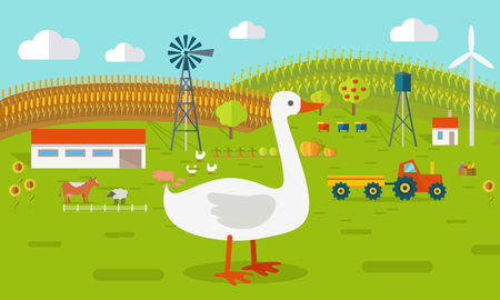 Farmyard vector illustration. Flat design. Goose standing against the farm landscape, tractor, cow, fields on background. Organic farming concept. Traditional agriculture. Modern ecological farm.