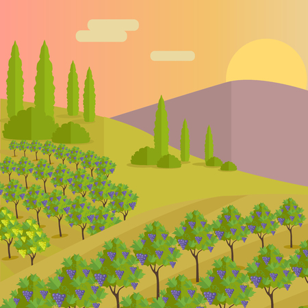 Vineyard plantation of grape-bearing vines, grown mainly for winemaking, raisins, table grapes and non-alcoholic juice. Vinegrove green valley. Part of series of viniculture production. Vector