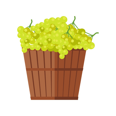 Wooden basket with grapes. White Wine. Fruit for preparation check elite vintage strong wine. Bunch or cluster of grapes. Grapery racemation. Part of series of viniculture production items. Vector