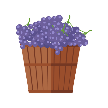 Wooden barrel with bunches of red wine grape. Vineyard grape icon. Wine barrel with red grapes icon. Wine grape icon. Isolated object in flat design on white background. Vector illustration.
