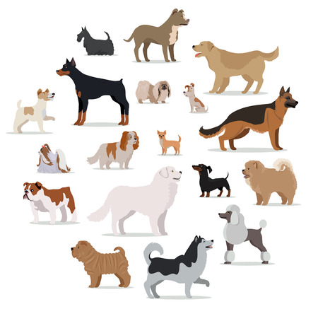 small dog: Dogs breed set isolated on white. Collection of big and small puppies. Different types of dogs. Exhibition of popular dog canine species. Pedigreed animals in cartoon style. Vector illustration Illustration