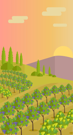beautiful landscape: Grapes leaves in a sunny vineyard. Vineyard langscape. Rural landscape with vineyard and grapes bunches. Natural background. Landscape with rolling hills and valleys. Beautiful rows of grapes.