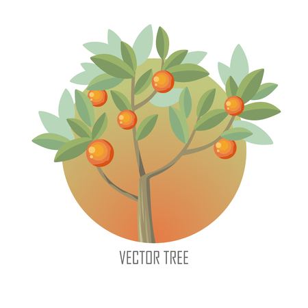 plant tree: Orange tree with green leaves and ripe oranges. Vector tree round icon. Tree forest, leaf tree isolated, tree branch nature green, plant eco branch tree, organic natural wood illustration. Illustration