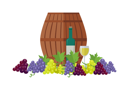 Wooden barrel with wine. Different sorts of grapes. Bottle and glass of check elite vintage strong wine. Bunches or clusters of grapes. Part of series of viniculture production items. Vector