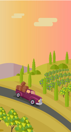 vineyard sunset: Grapes leaves in a sunny vineyard. Rural landscape with vineyard and grapes bunches. Car with wooden barrels on road. Landscape with rolling hills and valleys. Beautiful rows of grapes.