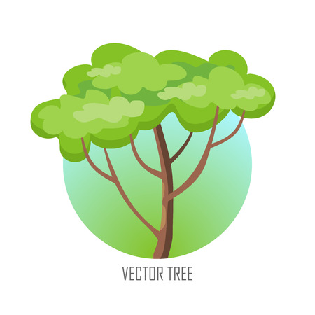 tree  forest: Tree with green leaves. Vector tree round icon. Tree forest, leaf tree isolated, tree branch nature green, plant eco branch tree, organic natural wood illustration. Vector illustration Illustration