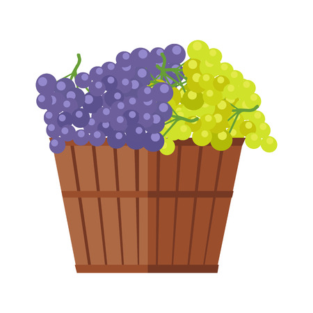 Wooden barrel with bunches of red and white wine grape. Vineyard grape icon. Wine barrel with grapes icon. Wine grape icon. Isolated object in flat design on white background. Vector illustration.