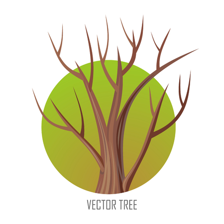 forest wood: Isolated oak tree without leaves. Bare oak tree. Tree forest, leaf tree isolated, tree branch, plant eco branch tree, organic natural wood illustration. Autumn tree without leaves. Oak round icon.