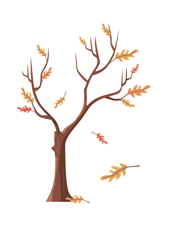 plant tree: Isolated oak tree with falling leaves. Tree forest, leaf tree isolated, tree branch, plant eco branch tree, organic natural wood illustration. Falling autumn leaves. Oak icon. Vector illustration. Illustration