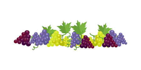 purple grapes: Bunches of red, white and purple wine grapes with green leaves. Fresh fruit. Vineyard grape icon. Grape icon. Wine grape icon. Isolated object in flat design on white background. Vector illustration