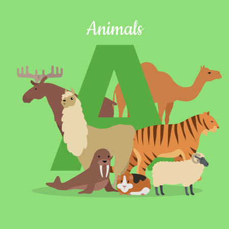 specie: Animal alphabet vector. Flat style. ABC with animals. Camel, elk, llama, tiger, walrus, guinea pig, sheep standing on green background, letter A behind. For children s books, textbooks illustrating
