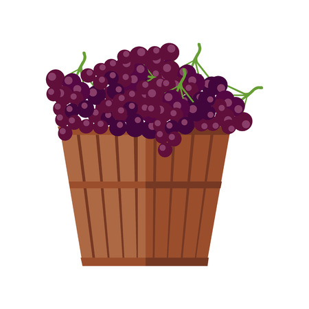cluster: Wooden basket with grapes. Red vine. Fruit for preparation check elite vintage strong wine. Bunch or cluster of grapes. Grapery racemation. Part of series of viniculture production items. Vector