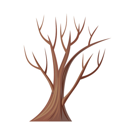 tree. Oak isolated on white. Bare tree without leaves. Oak is a tree or shrub in the genus Quercus of the beech family, Fagaceae.  Part of series of different trees. illustration