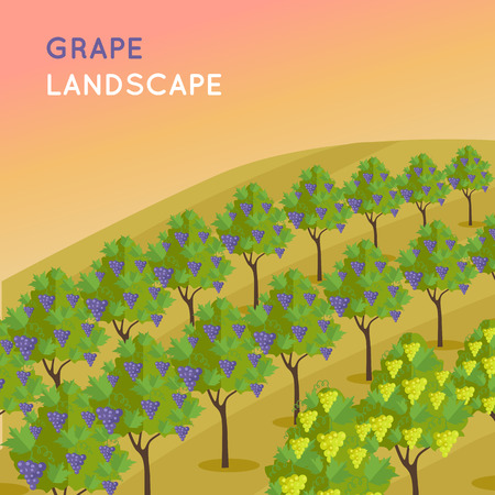 Wine landscape. Vineyard plantation of grape-bearing vines, grown for winemaking, raisins, table grapes and non-alcoholic juice. Vinegrove valley. Part of series of viniculture production.