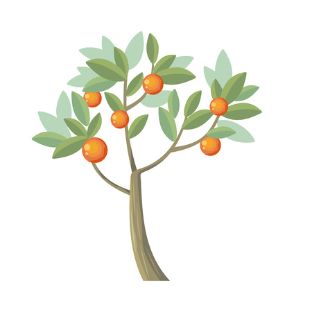 bole: tree. Orange isolated on white. Citrus trees belong to single genus Citrus and remain entirely interfertile. Includes grapefruits, lemons, limes. Part of series of different trees.