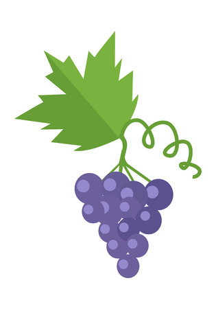 bue: Bunch or cluster of red grapes. Blue grapes with a leaf.  Fruit for preparation check elite vintage strong wine. Grapery racemation. Part of series of viniculture production items.