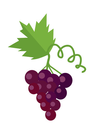 grapes on vine: Bunch of red wine grape with green leaves. Fresh fruit. Vineyard grape icon. Red grape icon. Wine grape icon. Isolated object in flat design on white background. Vector illustration. Illustration