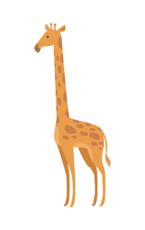 giraffa: Giraffe Giraffa camelopardalis cartoon animal isolated on white. African even toed ungulate mammal, the tallest living terrestrial animal and the largest ruminant. Sticker for children. Vector