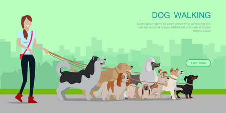 golden retriever puppy: Dog walking banner. Woman walks with Golden Retriever, Jack Russell Terrier, Maremma Sheepdog, Cavalier King Charles Spaniel, Pekingese, Doberman Pinscher breeds. Dog pet shop banner poster. Vector. Illustration