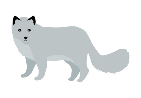 Polar fox flat style vector. Wild predatory animal. North fauna species. For nature concepts, children s books illustrating, printing materials. Fur hunting object. Isolated on white background Illustration