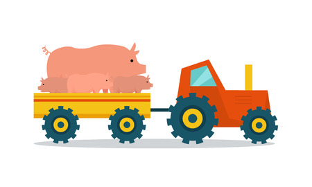 cartoon: Domestic animals transportation vector. Flat design. Tractor with trailer caring pigs. Cattle mowing on farm illustration. Farming concept for meat, agricultural, transport companies. On white.