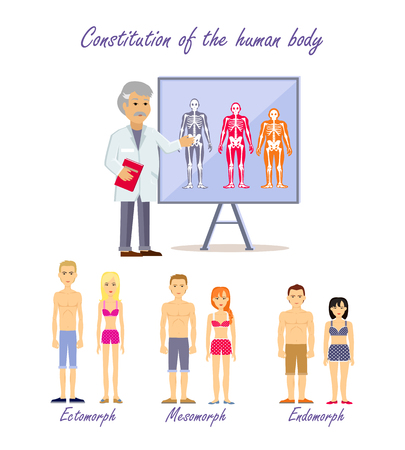 constitution: Constitution of the human body. Doctor shows type human body. Ectomorph endomorph and mesomorph, skeleton people, health physique, healthy figure. Healthcare. Normal structure. Vector illustration