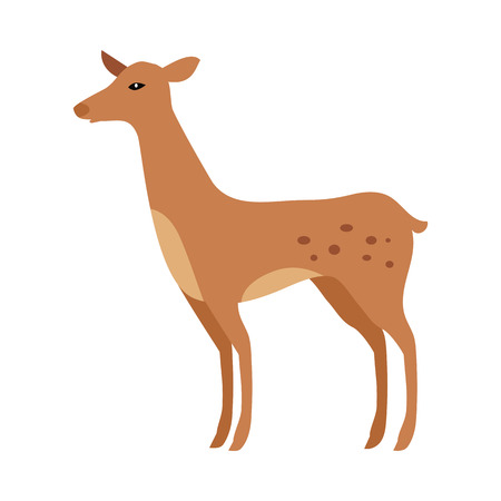 cervidae: Fawn isolated on white. Junior verdant young brown spotted deer. Ruminant mammals forming family Cervidae. Little inexperienced fawn in its first year. Cartoon illustration. Herbivore creature. Vector