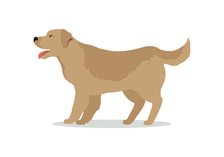 golden retriever puppy: Golden retriever dog isolated on white. Labrador Retriever. Large, strongly built breed with a dense, water-repellant wavy coat. Blonde, yellow, or gold puppy. Series of puppies icon symbols. Vector