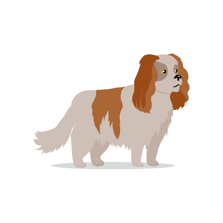 Cocker spaniel dog breed flat design vector. Purebred pet. Domestic friend and companion animal illustration. For pet shop ad, animalistic hobby concept, breeding illustration. Cute canine portrait. Illustration