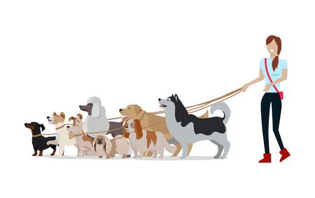 Dog walking banner. Woman walks with Golden Retriever, Jack Russell Terrier, Maremma Sheepdog, Cavalier King Charles Spaniel, Pekingese, Doberman Pinscher breeds. Dog pet shop banner poster. Vector. Illustration