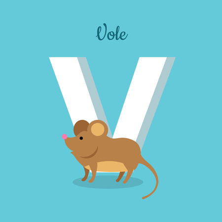 glossary: Animal alphabet vector concept. Flat style. Zoo ABC with wild animal. Cute vole mouse standing on blue background, letter V behind. Educational glossary. For children s books, textbooks illustrating Illustration