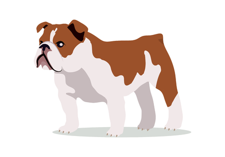 English bulldog breed flat design vector. Purebred pet. Domestic friend and companion animal illustration. For pet shop ad, animalistic hobby concept, breeding illustration. Cute canine portrait. Illustration