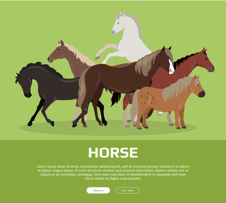 Horse conceptual web banner. Flat style vector. Group of different horses breeds, variety colors and sizes standing, running and rearing. For equestrian club, horse riding courses landing page design