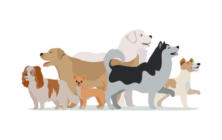 Collection of different dogs isolated on white. Husky, Golden retriever, Jack Russell Terrier, Maremma Sheepdog, Chihuahua, Cavalier king charles spaniel breeds. Dog pet shop banner poster. Vector.