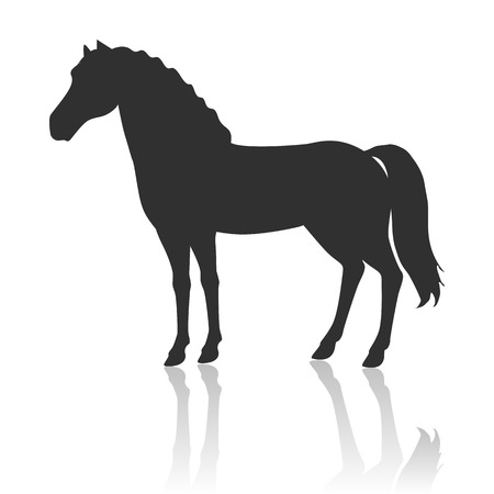 specie: Black horse vector. Flat design. Domestic animal. Country inhabitants concept. For farming, animal husbandry, horse sport illustrating. Agricultural species. Isolated on white