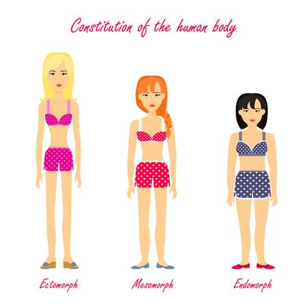 Constitutie van het menselijk lichaam. Ectomorph. Mesomorph. Endomorph. Vrouwen in ondergoed doek. Meisjes verschillende cijfers typen. Somatotype en grondwettelijke psychologie concept. vector illustratie