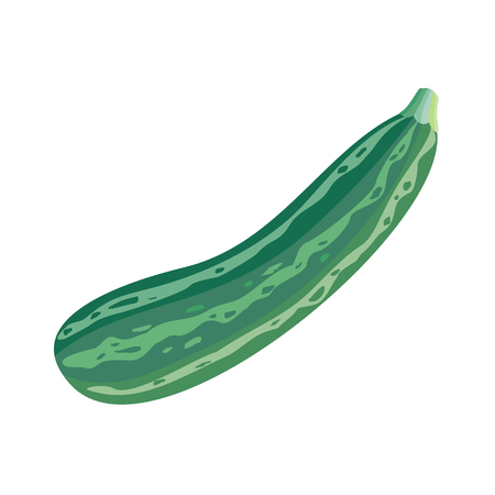 Fresh vegetable marrow isolated. Oblong, green squash. Vegetable marrow courgette or zucchini. Harvest courgette organic ingredient. Edible casings for mincemeat and stuffings. Vector in flat style