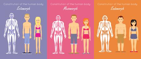 carrocería concepto constitución vector humano. Diseño plano. esquema de la anatomía antropológica. Esqueletos con siluetas musculares y personajes mujer y hombre. Ectomorfo, mesomorfo, endomorfo personas somatotipos