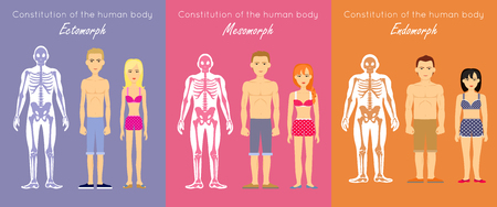 average: Human body constitution vector concept. Flat design. Anthropological anatomy scheme. Skeletons with muscle silhouettes and woman and man characters. Ectomorph, mesomorph, endomorph people somatotypes