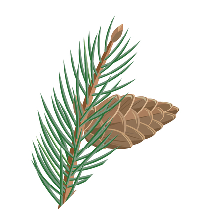 pine decoration: Pine branch with cone vector illustration. Flat design. Evergreen plant illustration for nature concept, gardening books illustrating, greeting cards decoration design.  Isolated on white background Illustration