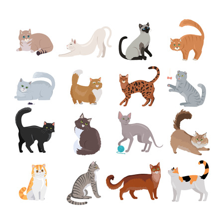 Set of icons with cats. Flat design vector. Variety breeds cats in different poses sitting, standing, stretching, playing, lying. For veterinary clinic, pet shop advertising. Collection of kittens Illustration