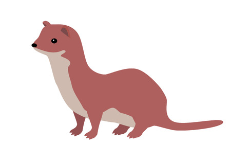 the children s: Ermine flat style vector. Wild predatory animal. Middle, high latitudes fauna species. Weasel or sable cartoon on white background. For nature concept, children s book illustrating, printing materials Illustration