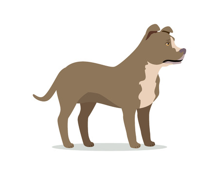 American pit bull terrier isolated. American Staffordshire Terrier, Bully, and Staffordshire Bull Terrier. Created by breeding bulldogs and terriers. Fighting dog. Series of puppies icons. Vector