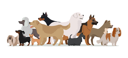 doggie: Group of different breeds dogs stand on white background. Dogs banner with space for text. Vector illustration in flat style. Cartoon dog character, pet animal Illustration