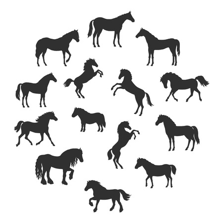 Collection of vector silhouettes of horses breeds in different poses. Standing, runnung, rearing horses. Flat style. For inforgaphics, app icons, equestrian club logo and web design. Isolated on white Illustration