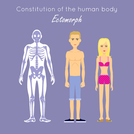 Constitution of human body. Ectomorph. Ectomorphic type characterized as linear thin usually tall fragile lightly muscled, flat chested and delicate. Person desire isolation, solitude and concealment. Vettoriali