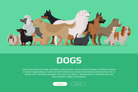 pekingese: Group of different breeds dogs stand on green background. Dogs banner with space for text. Vector illustration in flat style. Cartoon dog character, pet animal. Website horizontal template.