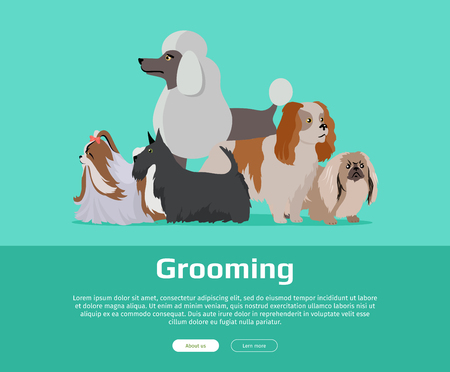 Dog grooming banner. Long haired dog breeds of different size isolated on green background. Pekingese, Shih Tzu, Poodle, Scottish Terrier, Aberdeen Terrier. Dog pet shop banner poster. Vector. Illustration